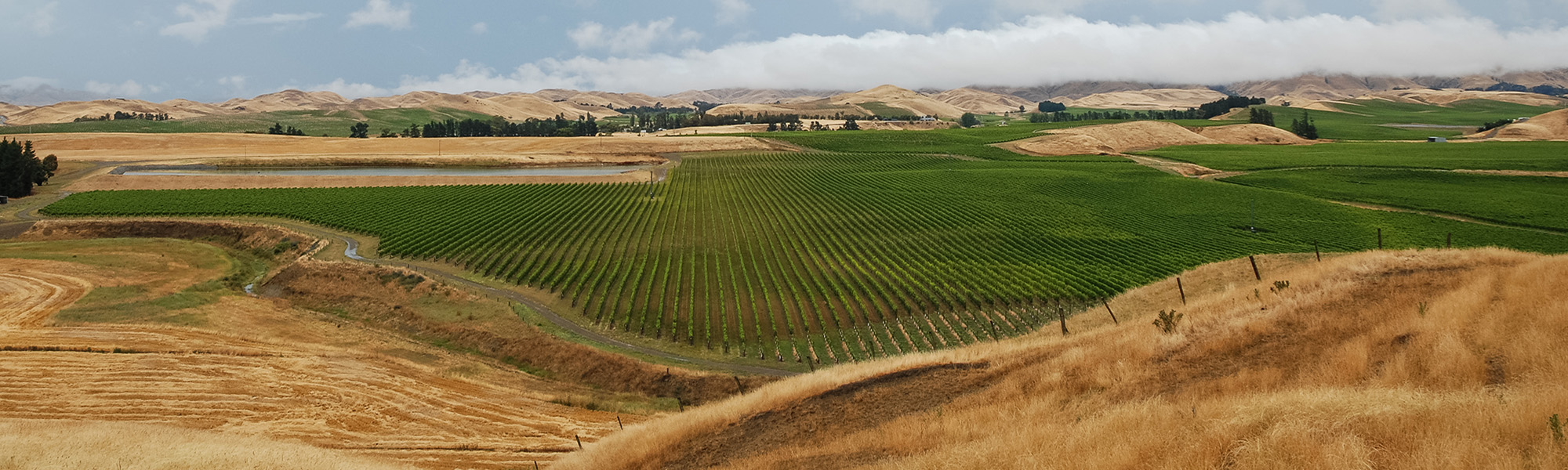 NZwineyards